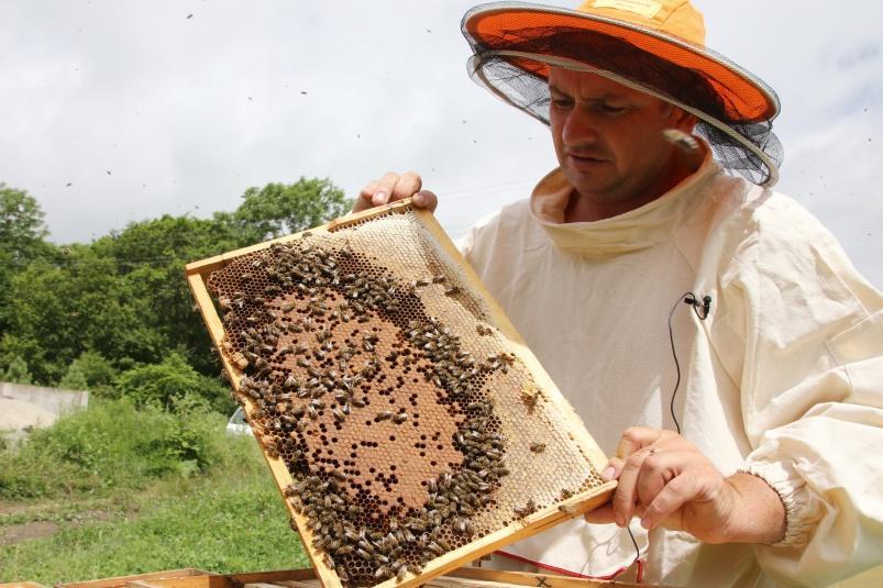Пчеловодство как бизнес: с чего начать разведение пчел в домашних условиях
