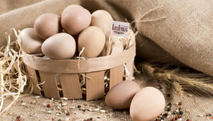 Бизнес на куриных яйцах – как правильно организовать?
