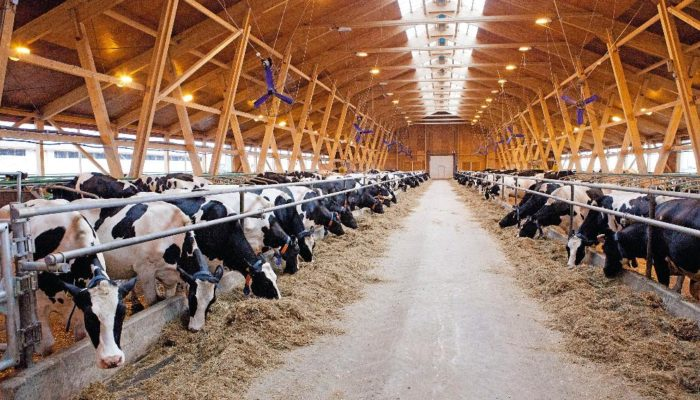 Строим бизнес на разведении крупного рогатого скота