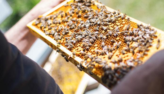 Особенности бизнес плана по пчеловодству