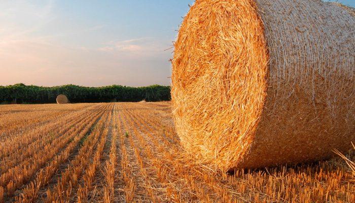 Что выгоднее всего в сельском хозяйстве