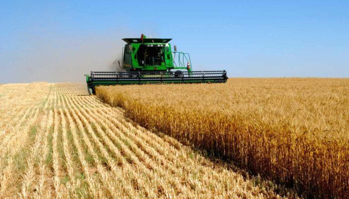 Как открыть крестьянско-фермерское хозяйство