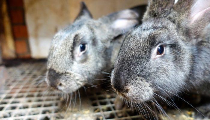 Создаем кроличью ферму и зарабатываем