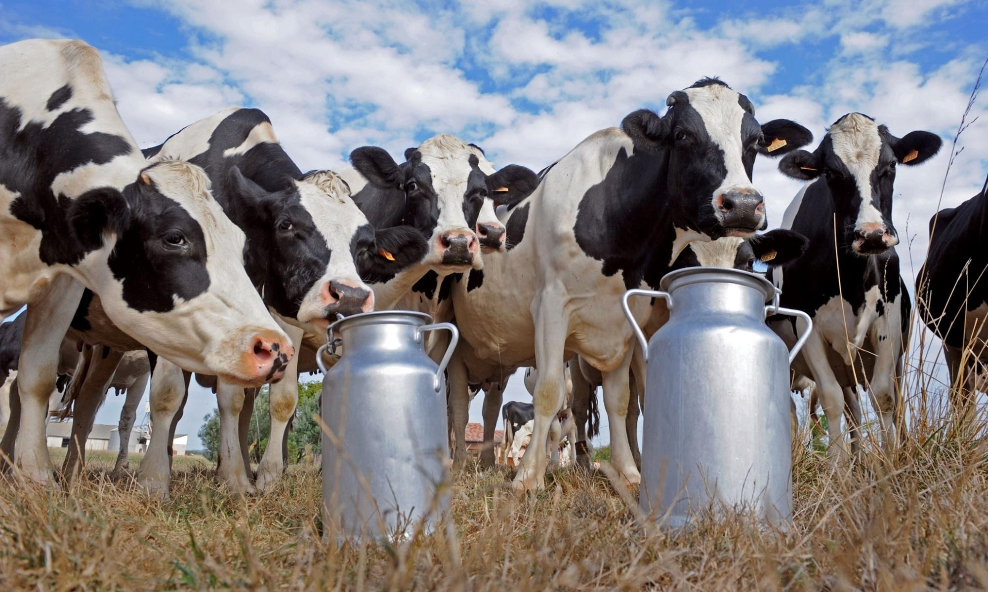 Бизнес план для молочного производства