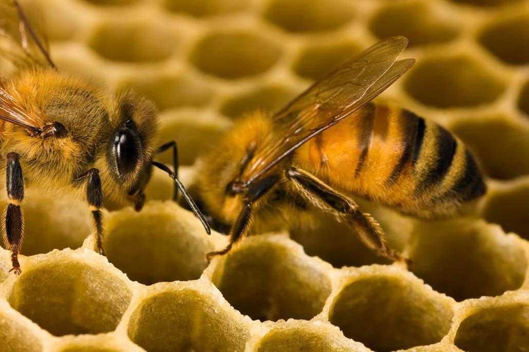 Бизнес план для пчеловодства