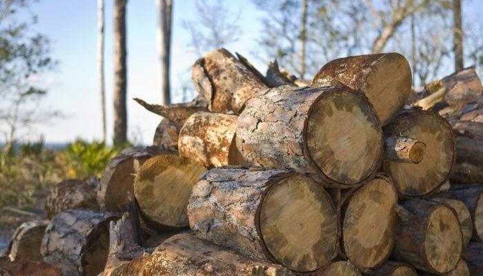 Бизнес на дровах – как организовать и сколько можно зарабатывать?