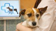 Как открыть ветеринарную клинику с нуля?