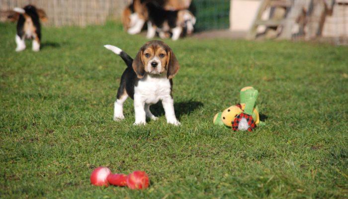 Как открыть питомник для собак с нуля?