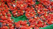 Бизнес-план: выращивание клубники в теплице круглый год