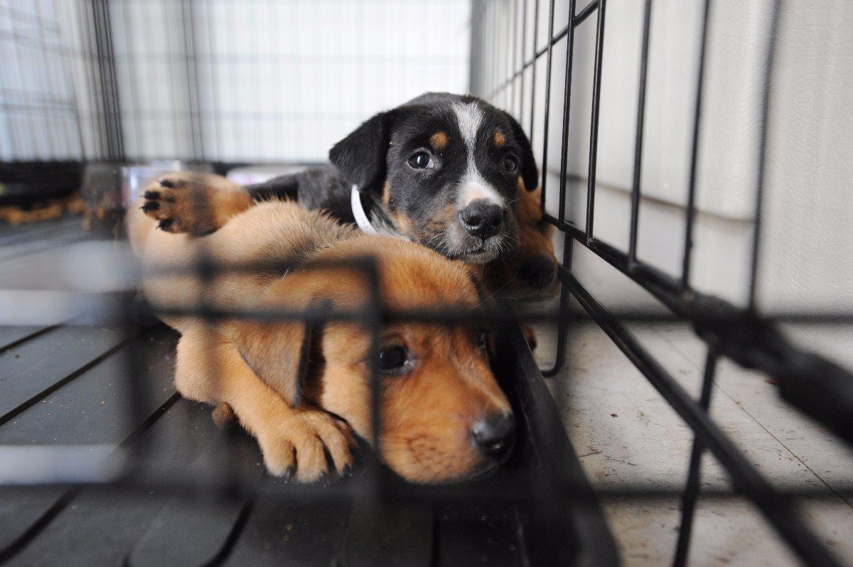 Каких животных выгодно разводить для бизнеса в домашних условиях, как заработать на домашних животных