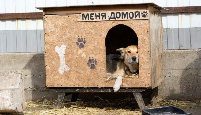 Как открыть приют для животных?